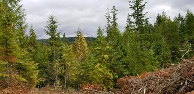 Benewah County Residential Lots & Land For Sale: Alder Creek Sub, Tract 35