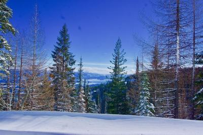 Sandpoint Residential Lots & Land For Sale: Lot 6 Tall Timber