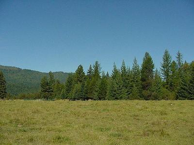 Priest River Residential Lots & Land For Sale: 296 Johnson Creek Road