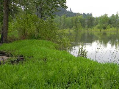 Benewah County Residential Lots & Land For Sale: NKA Lot 29 E Meadowhurst
