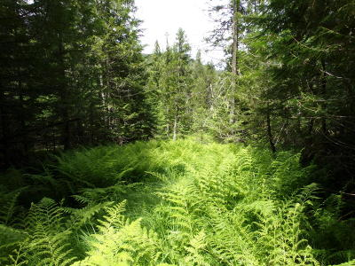 Benewah County Residential Lots & Land For Sale: NNA Coyote Crossing