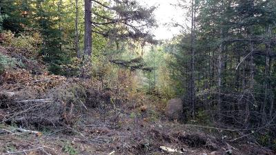 Sandpoint Residential Lots & Land For Sale: 228 B Olympic Dr