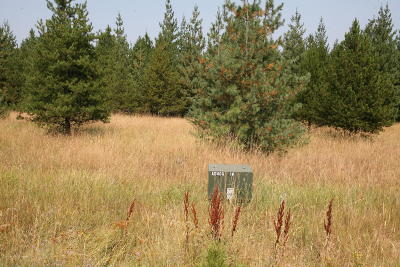 Priest River Residential Lots & Land For Sale: 137 Miss Kitty Lane