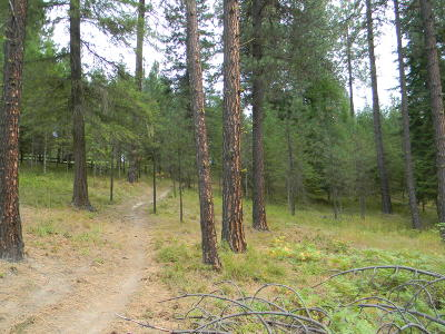 Benewah County Residential Lots & Land For Sale: NKA Ragans Addition Lot 53 & 54