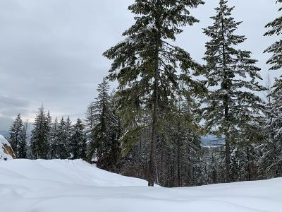 Sandpoint Residential Lots & Land For Sale: nna S Idaho Club Driv