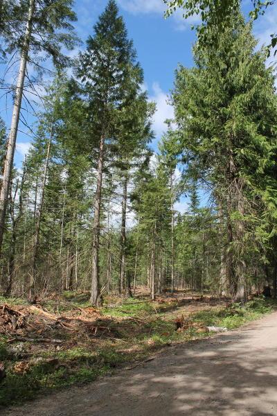 Clark Fork Residential Lots & Land For Sale: NKA Spring Lane NW 5 Acres