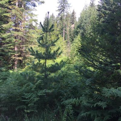 Priest River Residential Lots & Land For Sale: NNA Peterson Rd. (Lot 3)