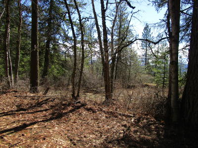 Sandpoint Residential Lots & Land For Sale: nna Wrenco Hills