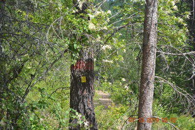 Priest River Residential Lots & Land For Sale: 1301 Gold Cup Mountain Rd