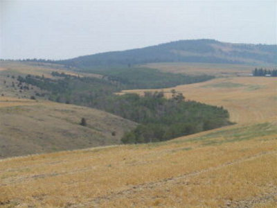 Teton County Farm For Sale: 9999 Hwy 33