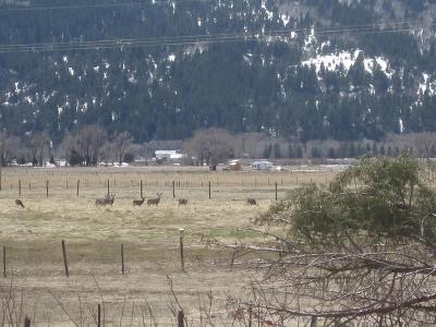 Bannock County, Bonneville County, Bingham County, Jefferson County, Madison County, Fremont County, Bear Lake County, Custer County, Power County, Teton County Farm For Sale: 186 Elk Ridge Drive