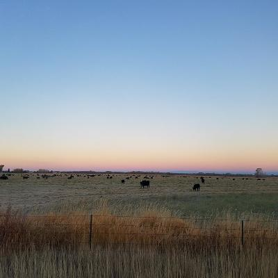Rexburg Residential Lots & Land For Sale: 3323 N 3000 W