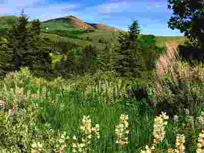 Pocatello Residential Lots & Land For Sale: N Panorama