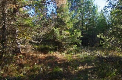 Peck, Pierce, Weippe Residential Lots & Land For Sale: Hjalmar Johnson Rd.