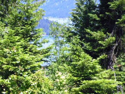 Orofino Residential Lots & Land For Sale: 554 Moose Ridge Drive