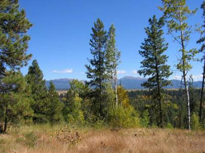 McCall Residential Lots & Land For Sale: Tbd Angels Flight Court