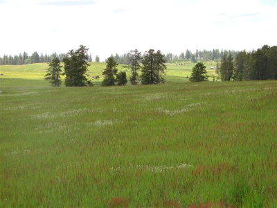 McCall Residential Lots & Land For Sale: 13751 Grouse Knoll Place