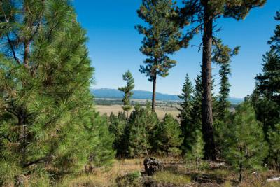 McCall Residential Lots & Land For Sale: 5522 Lupine Drive