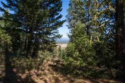 McCall Residential Lots & Land For Sale: 5538 Lupine Drive