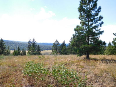 McCall Residential Lots & Land For Sale: Tbd Pleasant Acres Drive