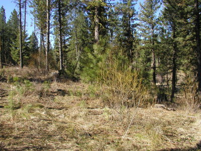 New Meadows Residential Lots & Land For Sale: Lot 1 Short Line Drive