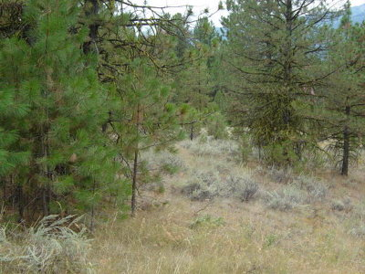 Cascade Residential Lots & Land For Sale: 335 339 Westview Road