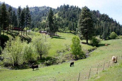 Riggins Farm For Sale: 667 Seven Devils Road