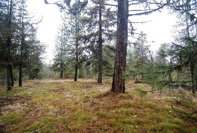 McCall Residential Lots & Land For Sale: 31 Fawnlilly Drive