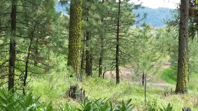 Cascade Residential Lots & Land For Sale: L3 B2 Wilderness Ranch Lane