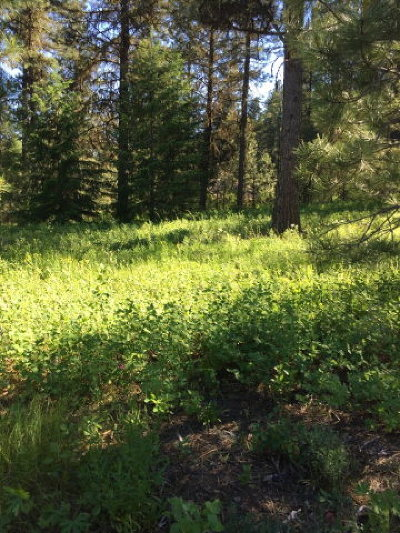 Residential Lots & Land For Sale: Tbd Ponderosa Court