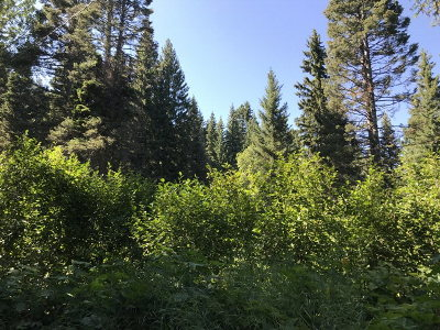 Cascade Residential Lots & Land For Sale: Tbd Brown Bear Drive
