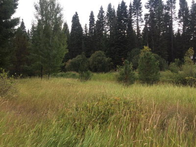 McCall Residential Lots & Land For Sale: 340 Carmen Drive