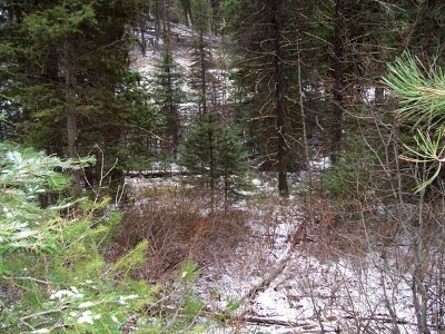 Cascade Residential Lots & Land For Sale: 80 Mountain Air Drive