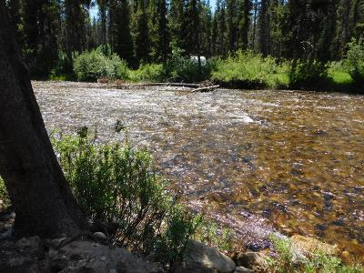 Idaho County, Valley County Residential Lots & Land For Sale: 475 Secesh River Road