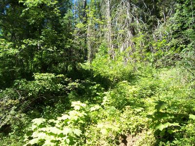 Donnelly Residential Lots & Land For Sale: 29 Burnt Wagon Trail