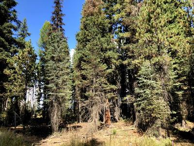 Donnelly Residential Lots & Land For Sale: 2516 Westwood Drive