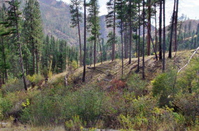 Idaho County, Valley County Residential Lots & Land For Sale: 131 Dustin Road