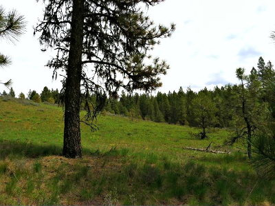 New Meadows Residential Lots & Land For Sale: Lot 5 Van Dorn Drive