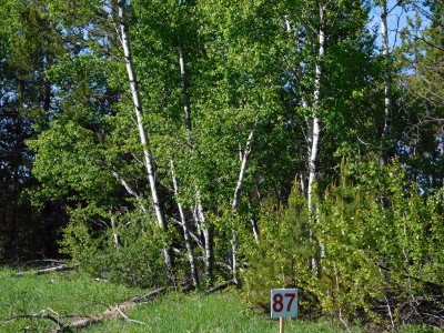 Residential Lots & Land For Sale: 159 Boulder Place