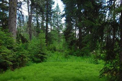 McCall Residential Lots & Land For Sale: 1551 Dragonfly Loop