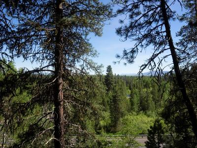 McCall Residential Lots & Land For Sale: 206 Sunny Way