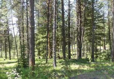 New Meadows ID Residential Lots & Land For Sale: $69,900