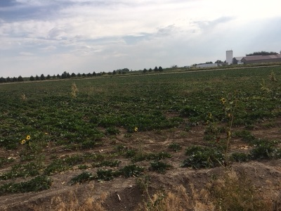 Nampa Residential Lots & Land For Sale: Victory Rd