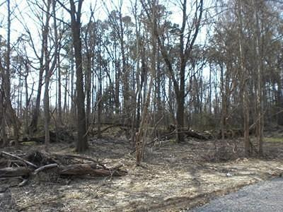 Williamson County Residential Lots & Land For Sale: Lot 19 Whitecotton Drive