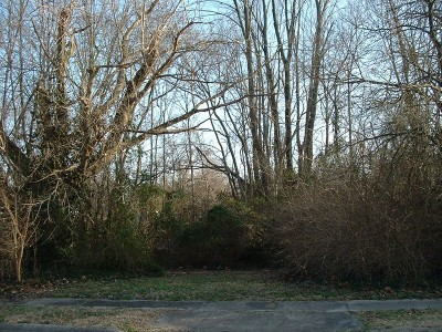 Carbondale Residential Lots & Land For Sale: 207 E Larch Street