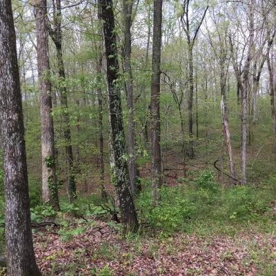 Carbondale Residential Lots & Land For Sale: Hidden Creek #8