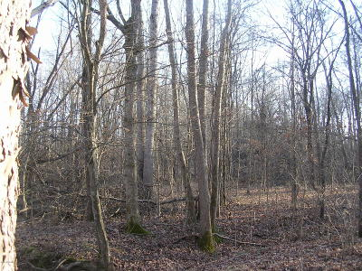 Pope County Residential Lots & Land For Sale: 0001 Henry Hicks Rd