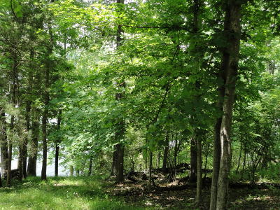 Residential Lots & Land For Sale: Lakeview Drive Lot 208