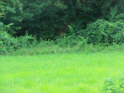 Williamson County Residential Lots & Land For Sale: S Thompsonville Road