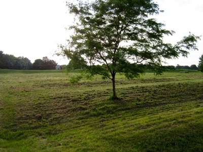 Residential Lots & Land For Sale: Lot 59 Madeline Drive